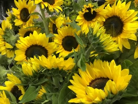 Sunshine Sunflower Bouquet Assorted sizes