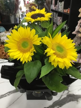 Sunhine in a box Sunflower boxed arrangement