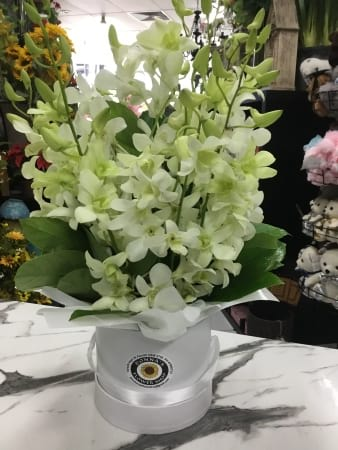 Purity white orchid hat box arrangement
